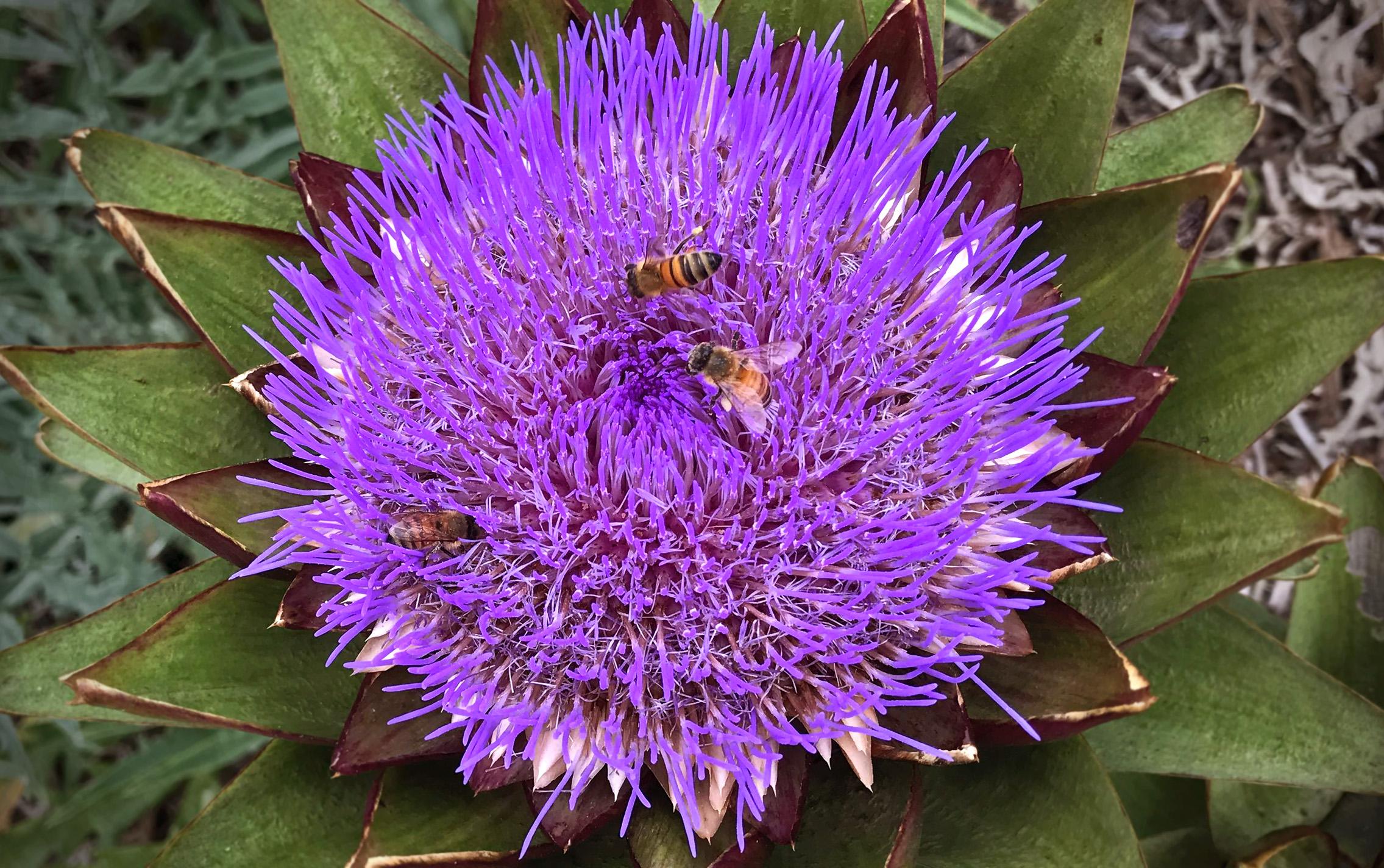beezonflower.jpg