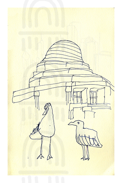 CHI12: Shedd Aquarium Gulls