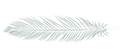 White_Gray_Feather_Horizontal_VSm.png