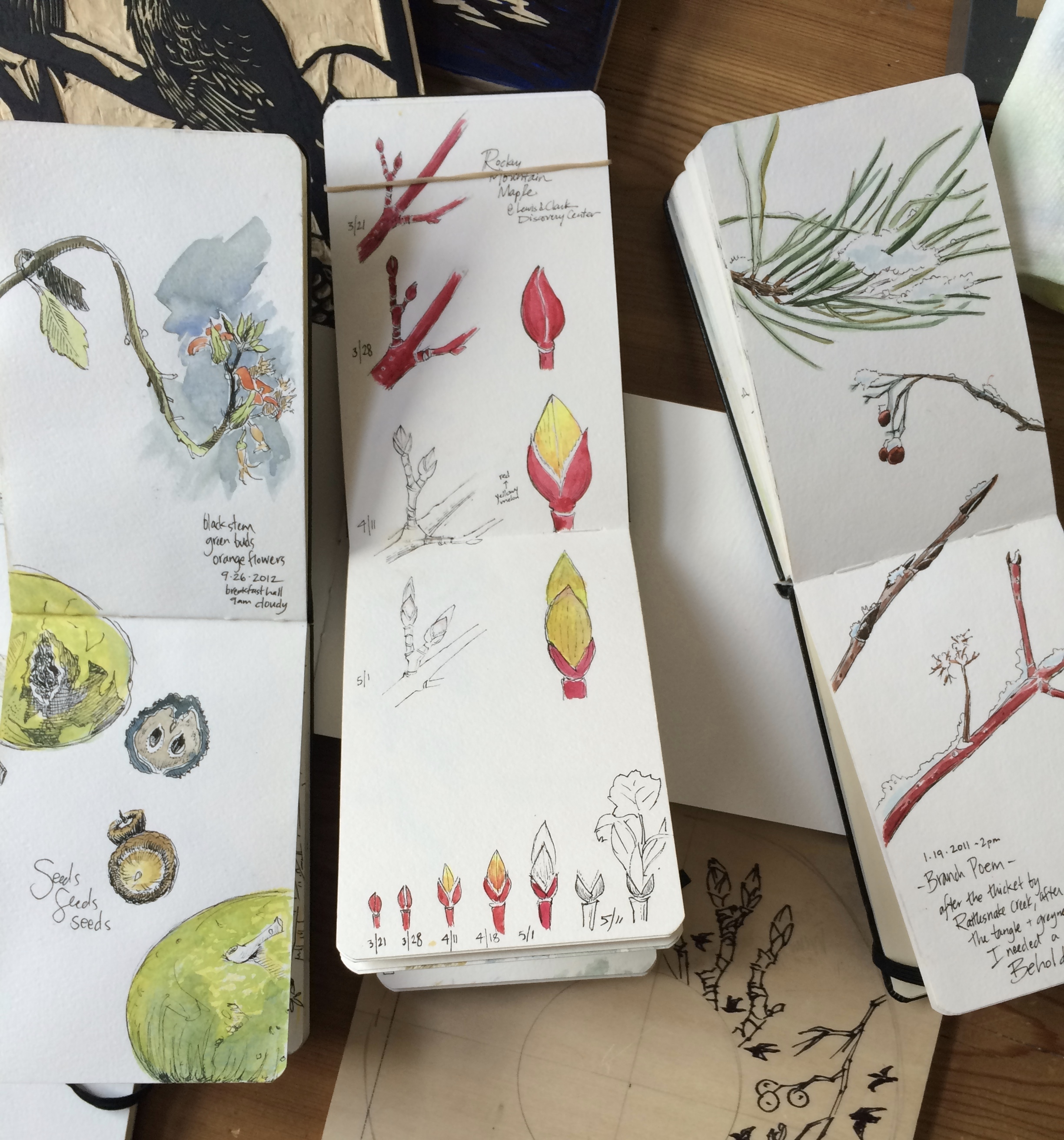 Field sketches in fall, winter and spring of seasonal discoveries.