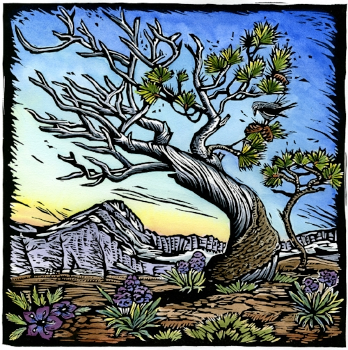 Whitebark Pine:  Wind Poem    Original hand-painted woodblock print. Limited edition of 100. $300 each, $800 for series of all three prints.