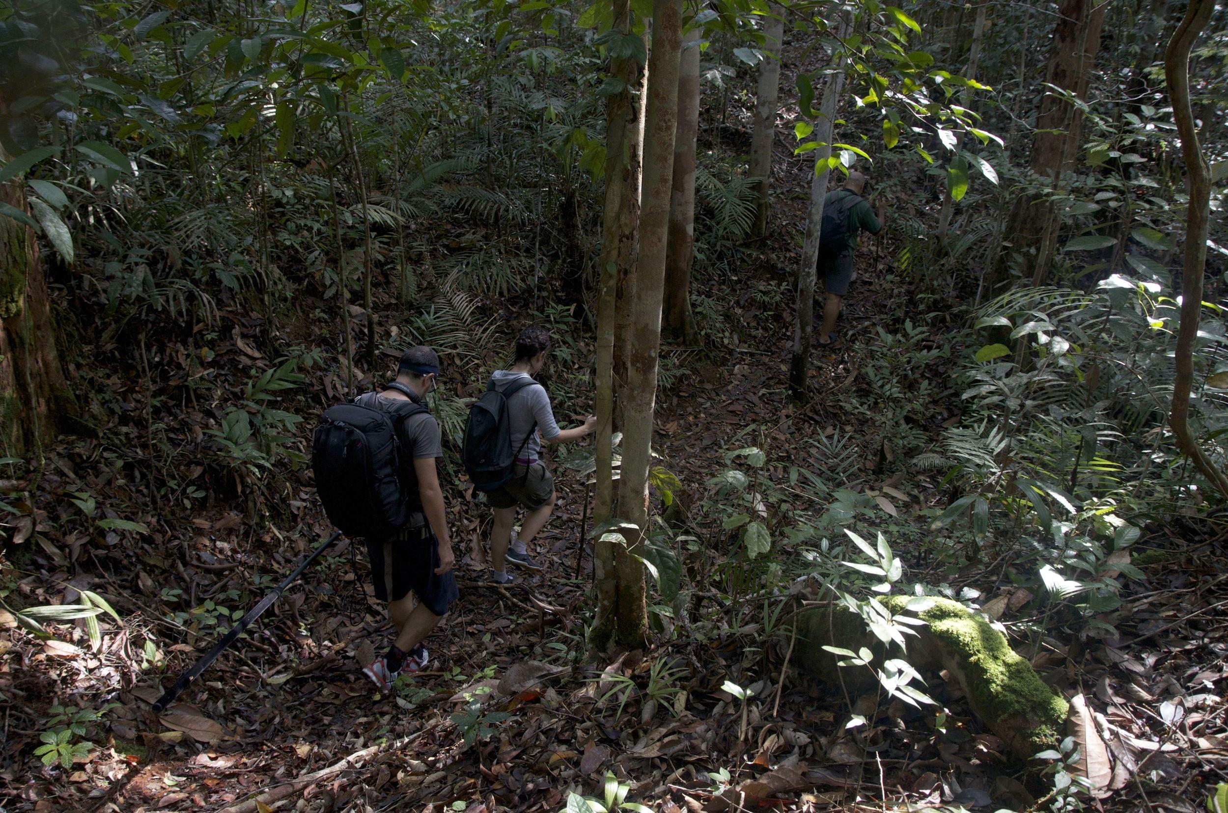 Field recording in Borneo