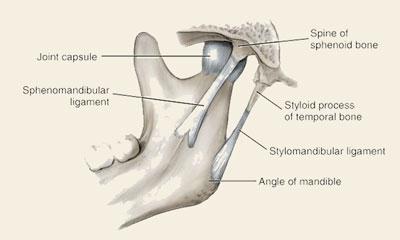 The-Emergency-Dentist-Sydney-TMJ-and-TMD-sleep-Disorder-bone-and-joint.jpg