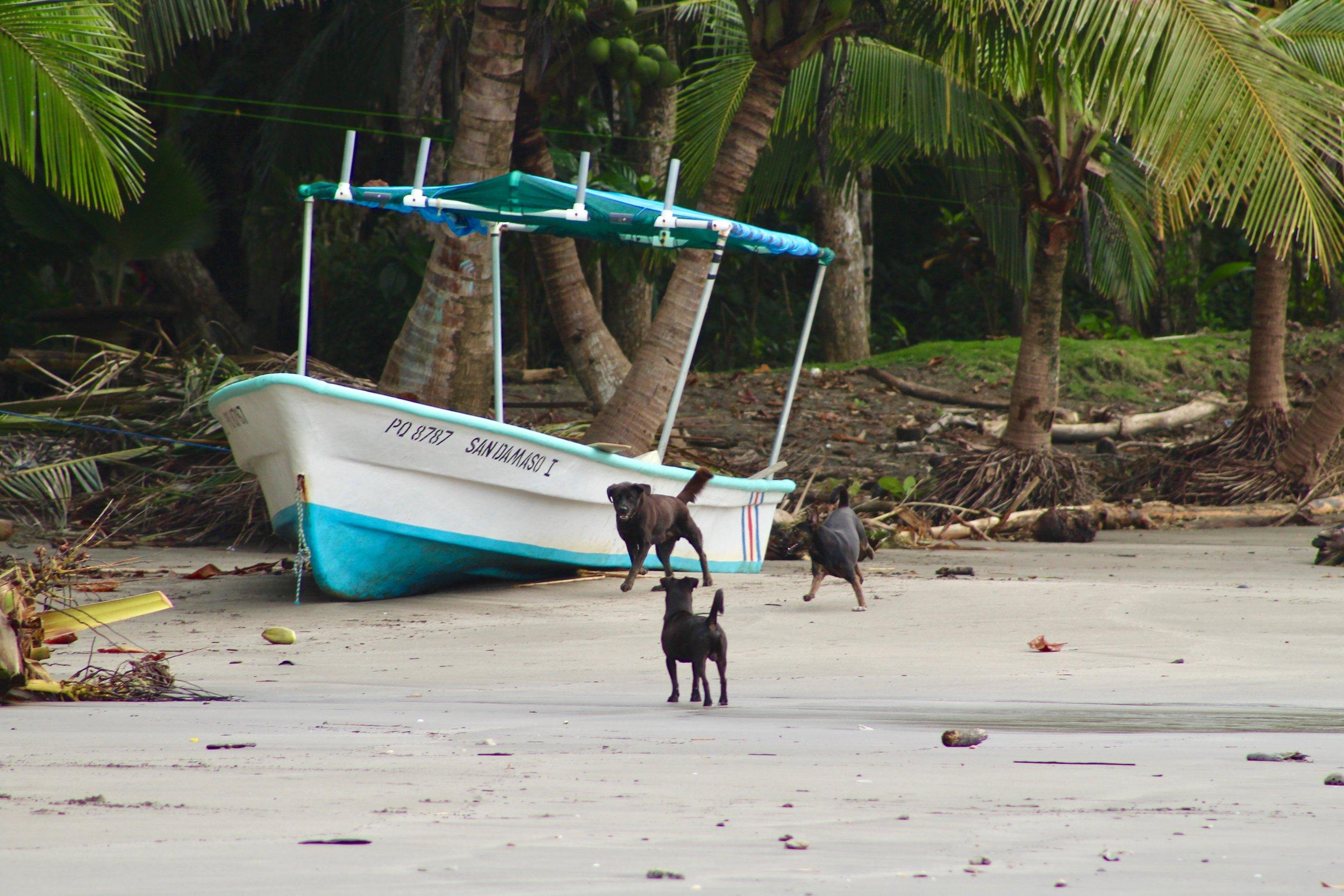 Wild Dogs Costa Rica