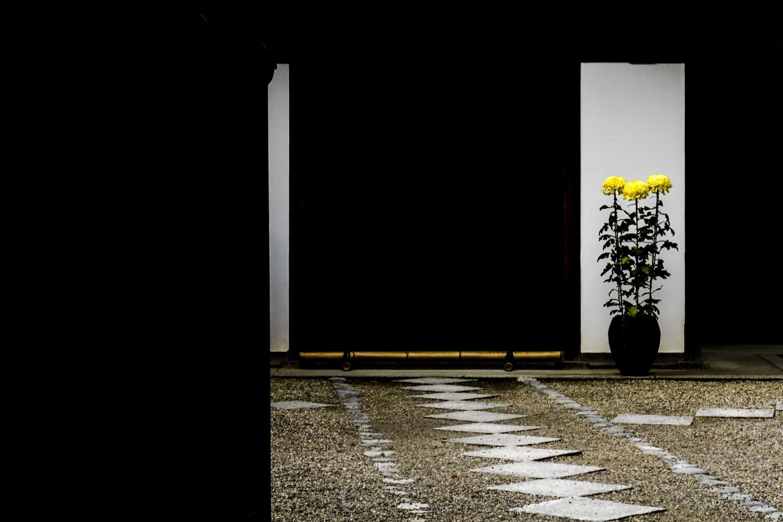 flowers_japan.jpg