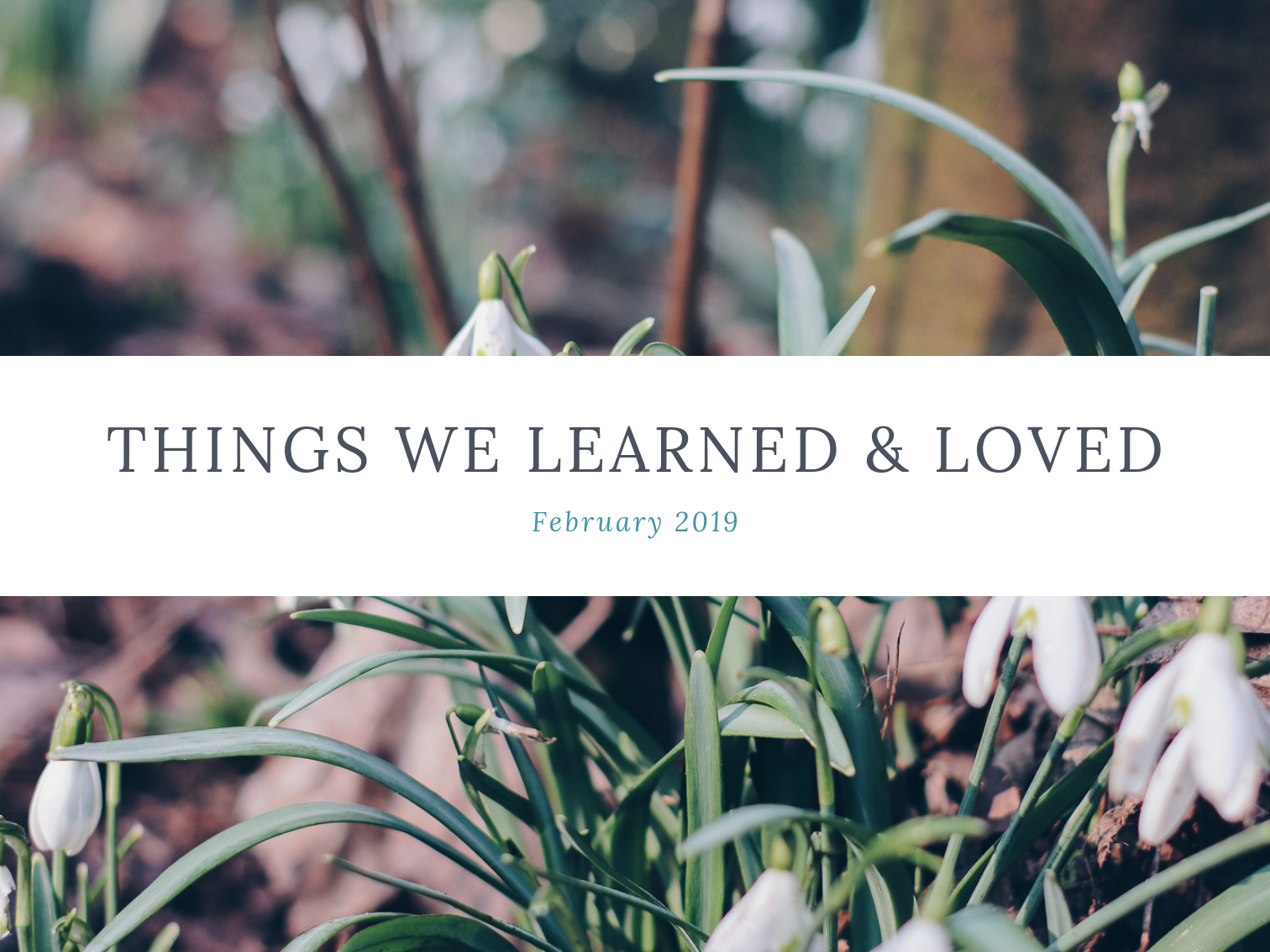 laura-rose-creative-things-we-learned-loved-february