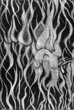 """Balearica V - Lemon Tree Bark, silverpoint, 5 x 3.5"""", Jeannine Cook"""