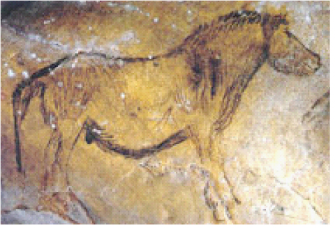 Grotte de Niaux, Przewalski horse