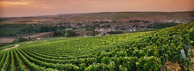 Burgundy -Chablis-Le-Clos (Image courtesy of Mick Rock, photographer)