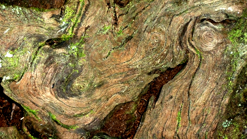 Live Oak Tree Stump II, photographer J. Cook