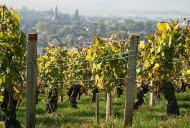 Chablis and vineyards, Burgundy