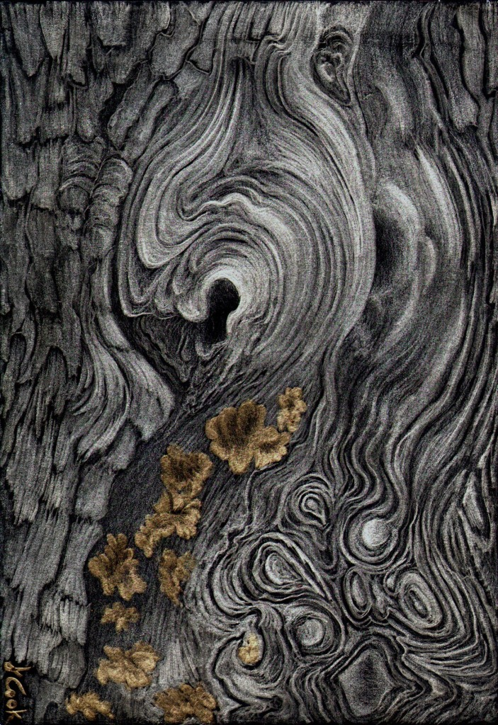 Cedar Swirls, silver-goldpoint on black ground, Jeannine Cook artist