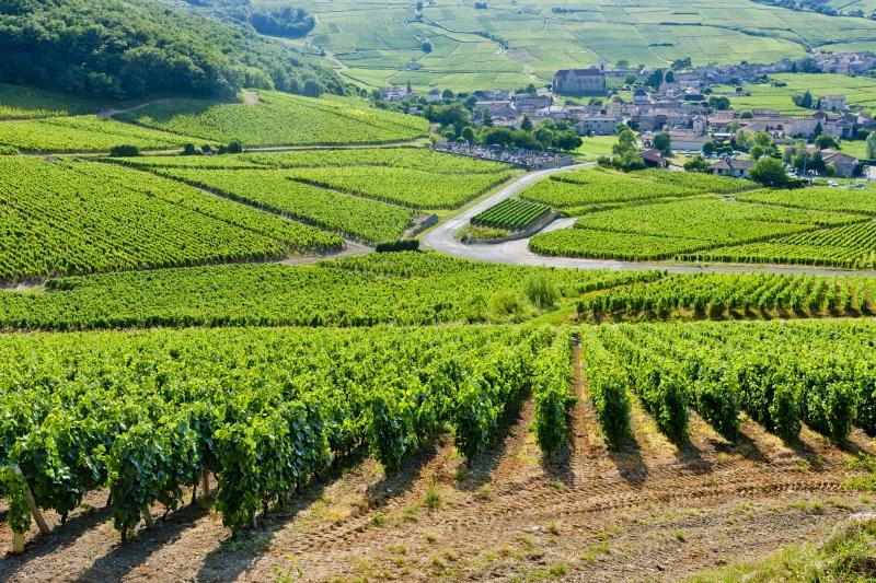 Vineyard in the Yonne, Burgundy
