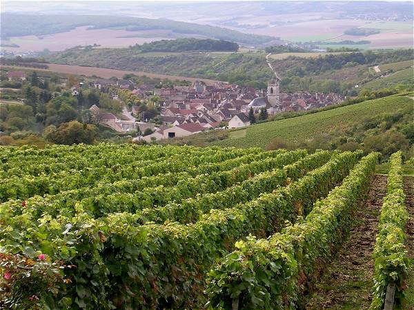 Vineyards, Chablis area