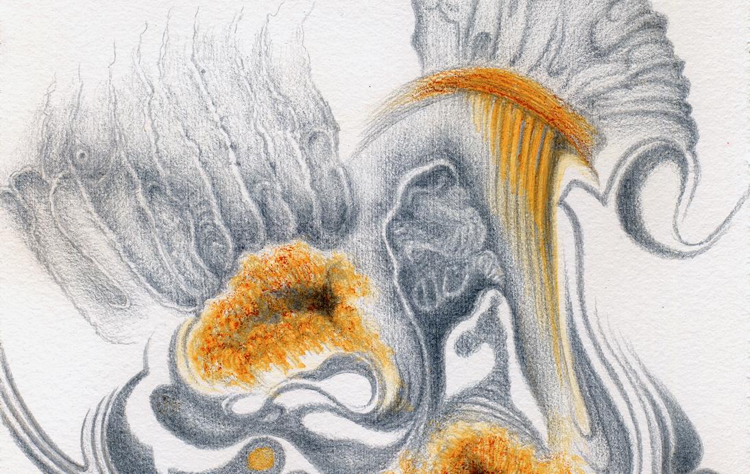 Ammonites de Bourgogne, silverpoint,watercolour, Jeannine Cook