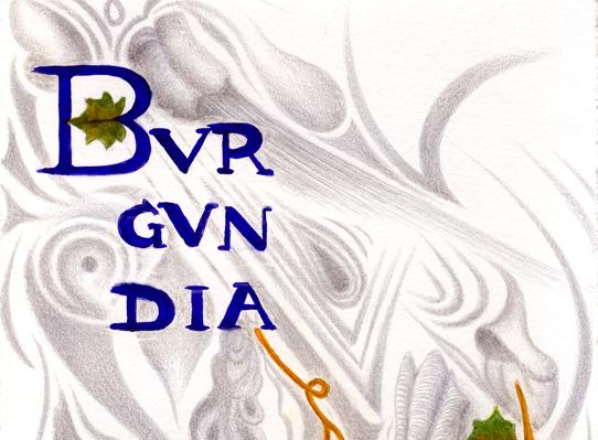 Bugundia I, silverpoint, watercolour