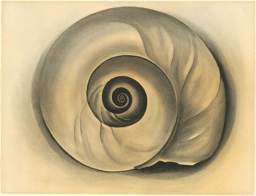 The Shell, Georgia O'Keeffe, 1934, charcoal on laid paper, (Image courtesy of the na tional Gallery of Art, Washington)