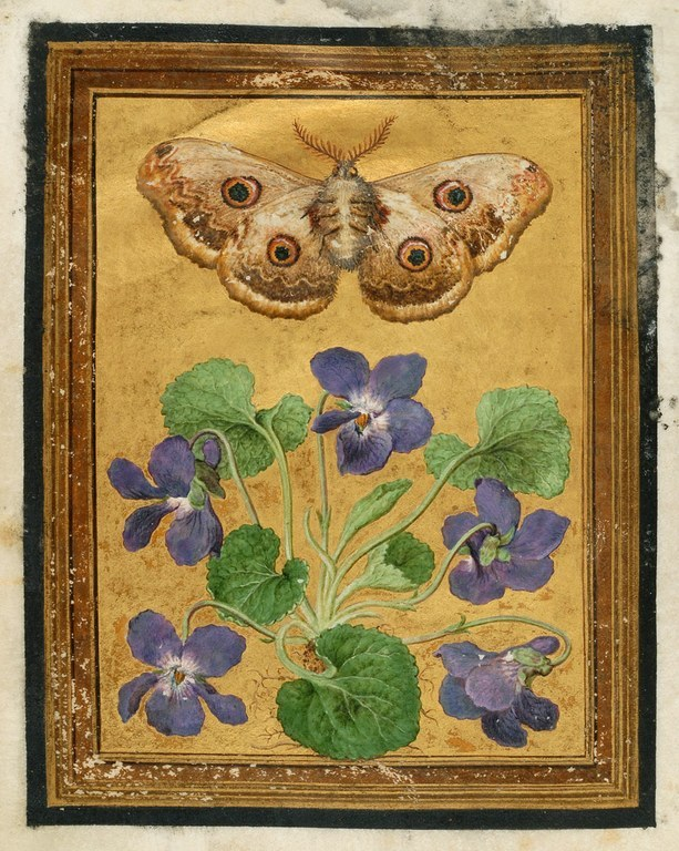 Flowers, Butterflies, Insects,  Jacques le Moyne de Morgues, late 16th century, (Image courtesy of Dumbarton Oaks, Washington)