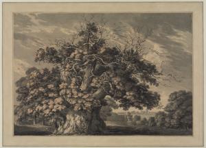 The Chestnut Tree at Little Wymondley, Hertfordshire (1789) Thomas Hearne, 1744-1817 (image courtesy of the Courtauld Instiitute of Art)
