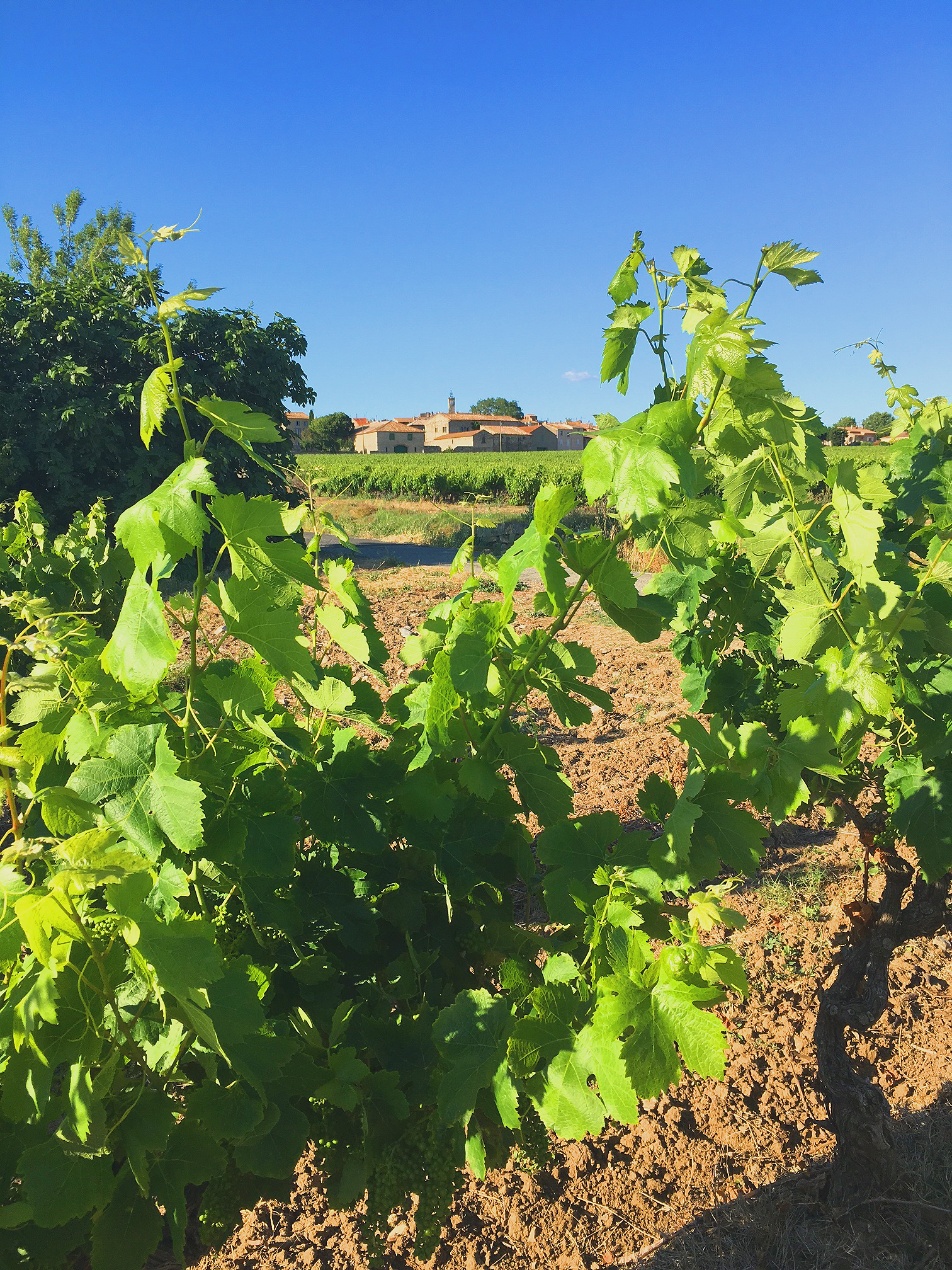 Sainte Valière, from one of the many vineyards surrounding the village