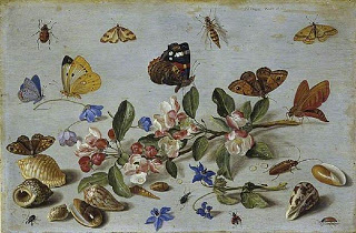 Butterflies and other Insects, 1661, oil on copper, 19.1 x 28.9 cm. Courtesy of the Fitzwilliam Museum