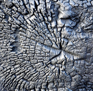 Bronze Tree Trunk , David Nash