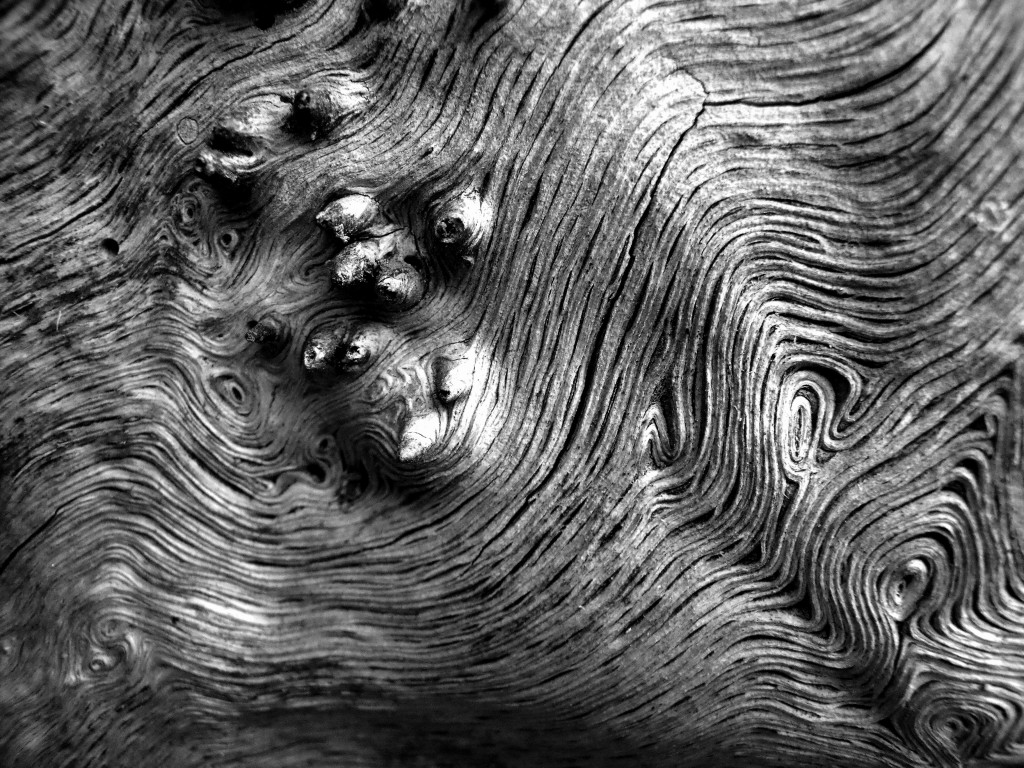 patternsinnature047copygrayscale.jpg