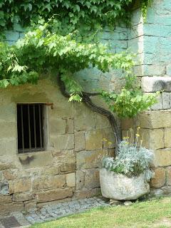 Vine outside Gothic Cellar, Abbaye de Beaulieu (artist's photograph)