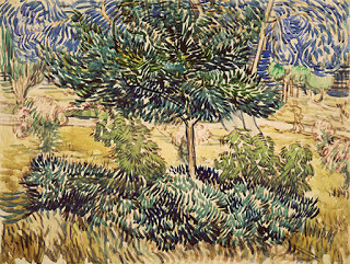 Tree and bushes in the garden of the asylum , May-June,1889. (Image courtesy of Van Gogh Museum, Amsterdam)