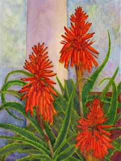 Aloe Exuberance, Palma., watercolour, Jeannine Cook artist