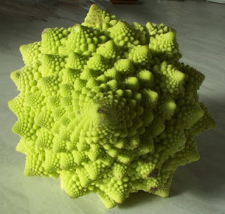 Romanesque cross between broccoli and cauliflower
