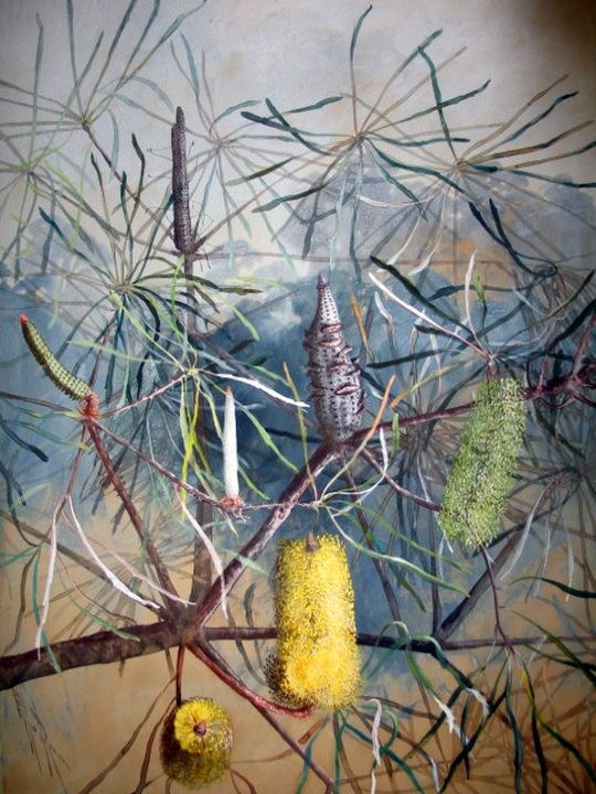 Swamp Banksia, watercolour and gouache, c. 1900, Marian Ellis Rowan, (Image courtesy of Museum of Applied Arts & Sciences)