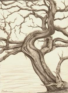 The Last Days for the Red Cedar, Prismacolor, Jeannine Cook artist