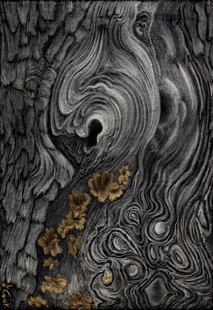 Cedar Swirls, metalpoint, Jeannine Cook artist