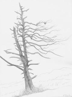 Solitaire, Wild Acres,  silverpoint, Jeannine Cook artist