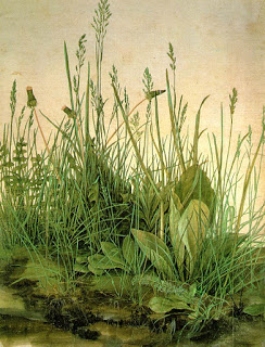 The Large Piece of Turf,  Albrecht  Dürer, watercolour and gouache on paper, 1503 (Image courtesy of the GraphischeSammlung Albertina, Vienna)