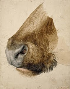 Muzzle of a Bull  , 1523, Albrecht Dürer  (Image courtesy of The British Museum.)