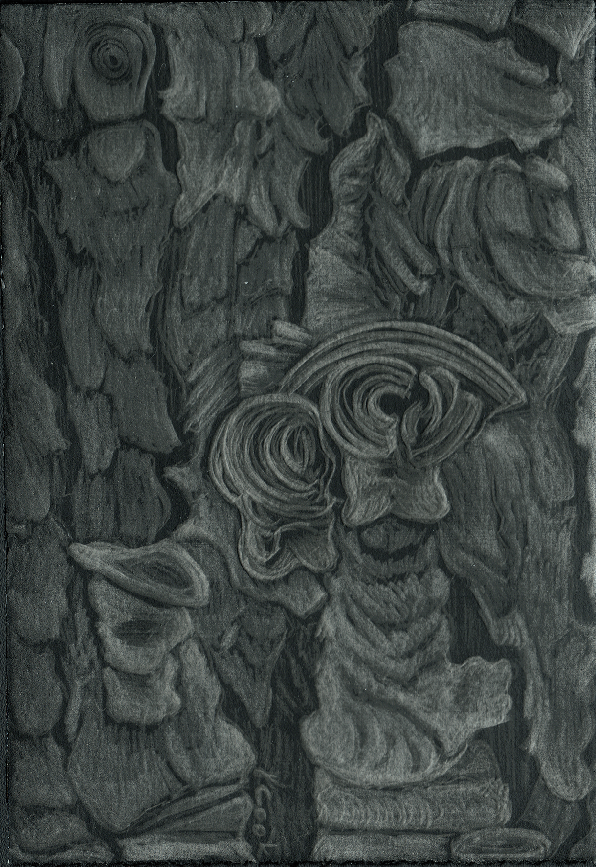 Apoyos IV - Pine tree bark - silverpoint. Jeannine Cook artist