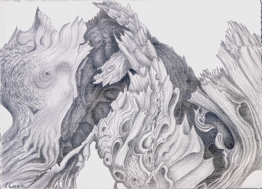 Cedar Lace.  silverpoint, Jeannine Cook artist, private collection