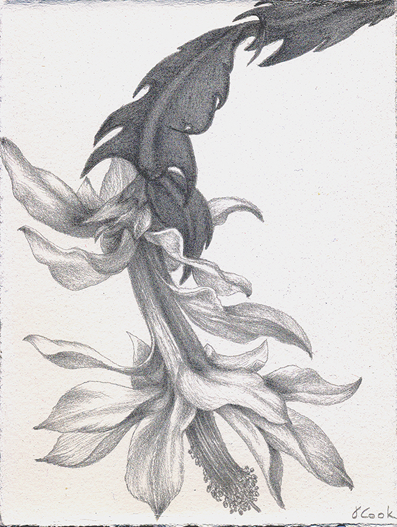 Christmas Cactus, silverpoint, Jeannine Cook artist