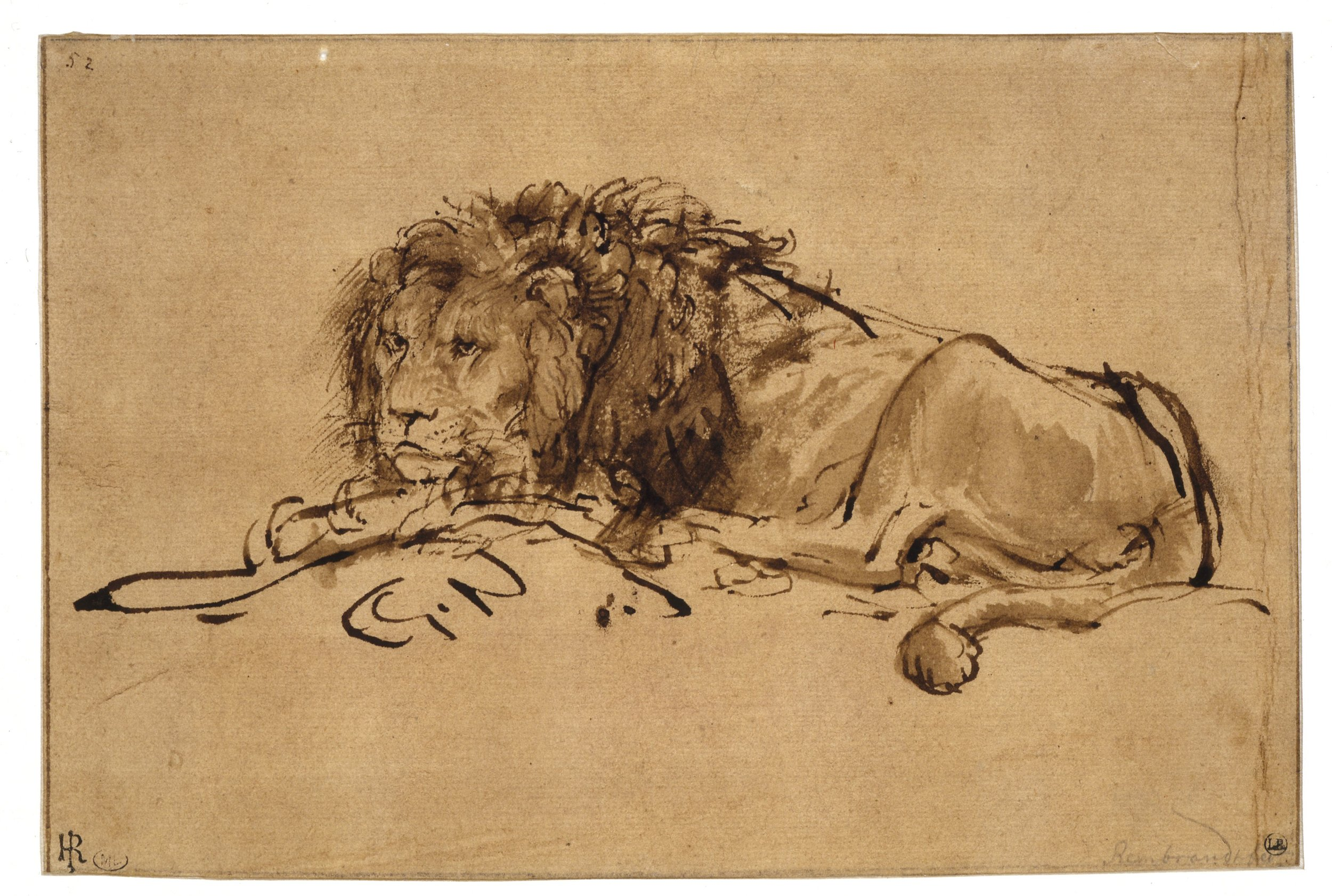 Lion resting, turned to the Left, Rembrandt, c. 1650-52 .Louvre, Paris