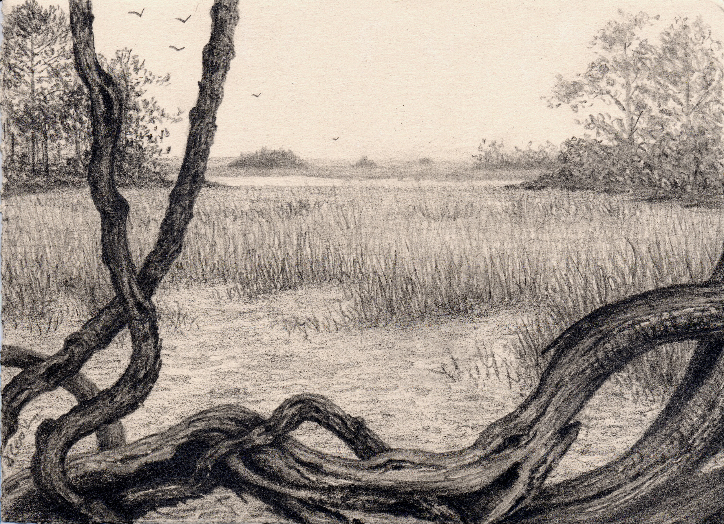 The Marshes of McIntosh, graphite, Jeannine Cook artist, Private collection