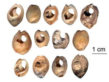 Shells like these, into which holes have carefully been drilled by hand, were used as beads. The beads, which were found at Moroccan Middle Paleolithic sites and are believed to be about 82,500 years old, were used as symbols and indicated status and beliefs, much in the way modern wedding rings or religious iconography do. (Image and text courtesy of NPR.org)