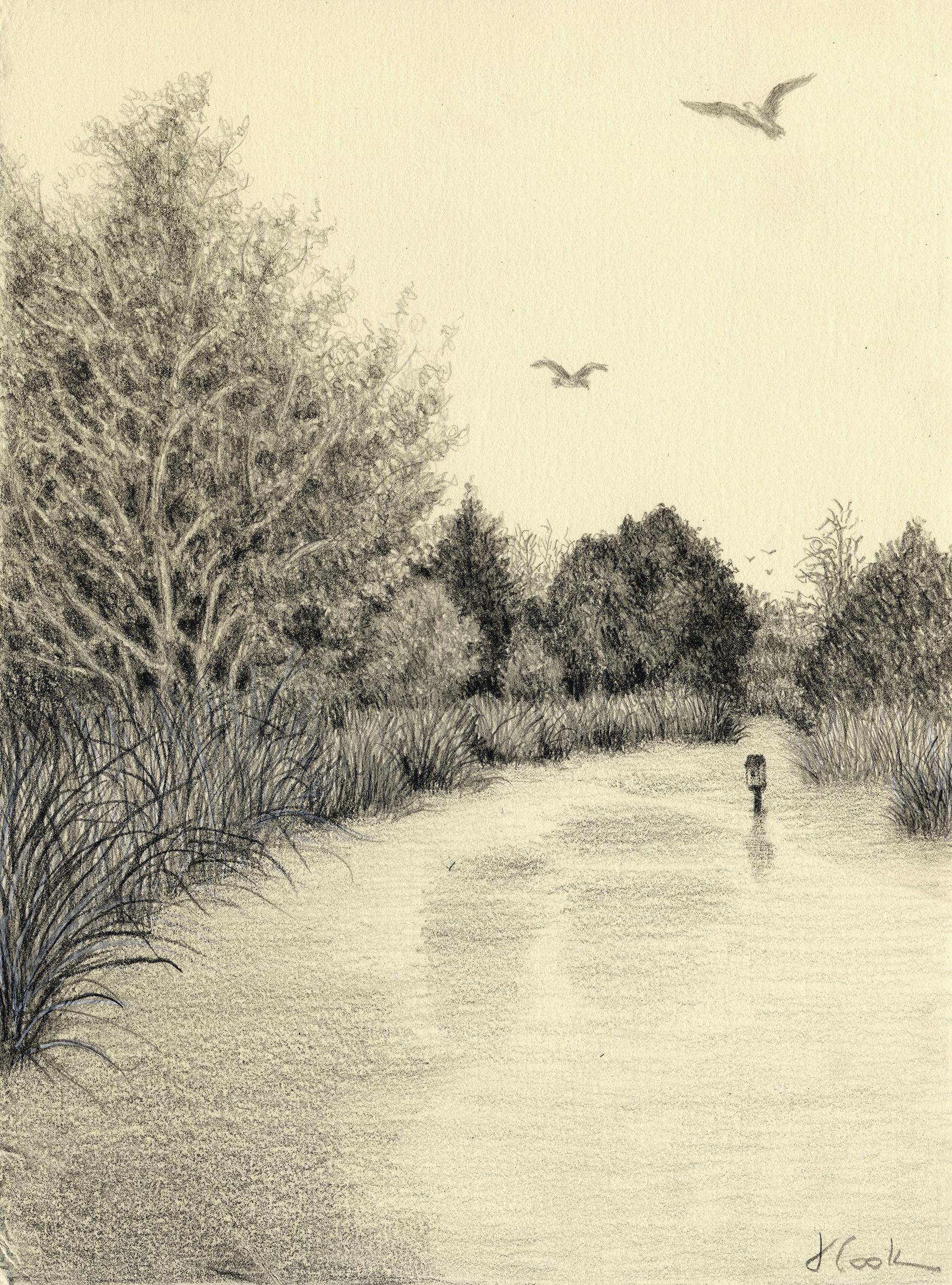 Osprey Patrol, Butler Island, graphite, Jeanine Cook artist