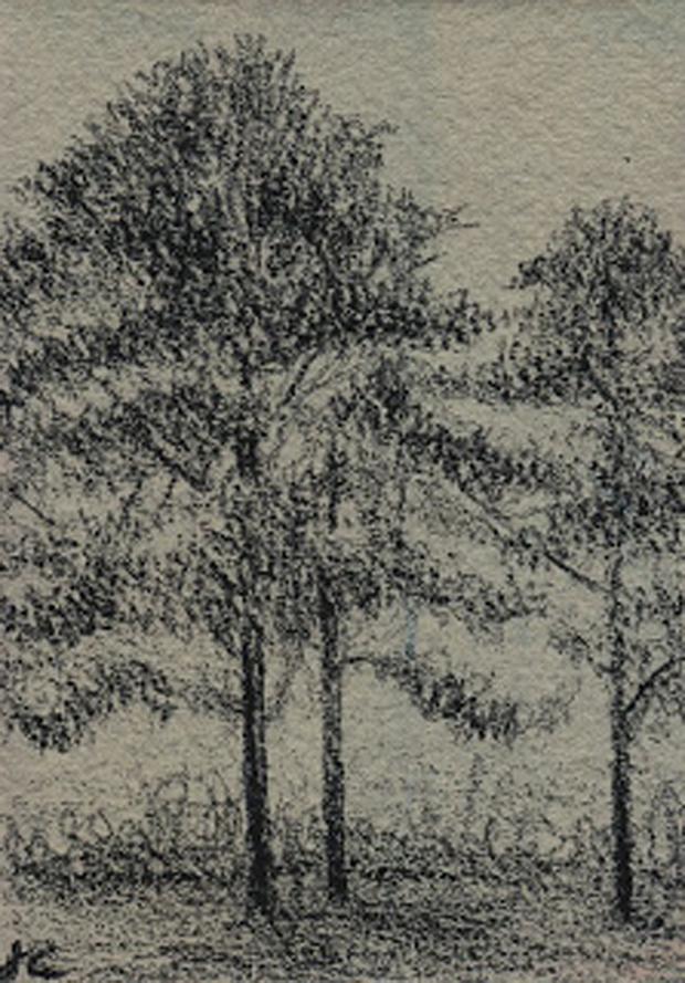Cedar Point Pines, graphite on tinted ground, Jeannine Cook artist