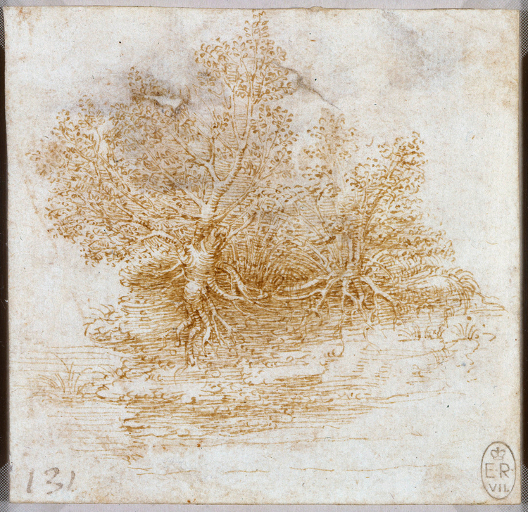 Plant-bush study, Leonardo da Vinci (Image courtesy of the Royal Collection)