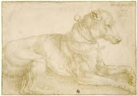 Dog resting, silverpoint, from 1520-21 Sketchbook, Albrecht Dürer (Image courtesy of the British Museum)