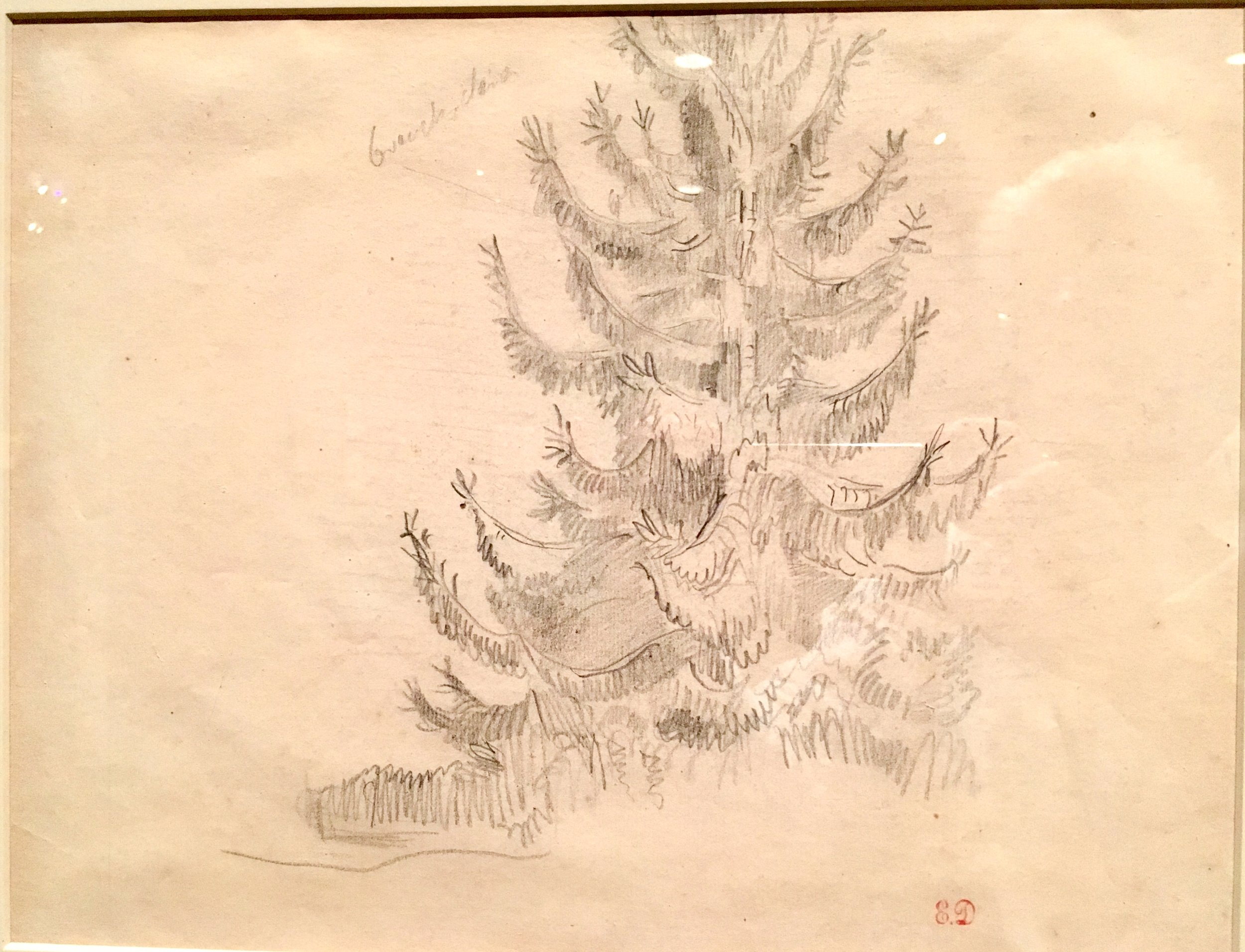 Fir Tree, 1850s.  graphite, Eugène Delacroix. after an initial 1844 visit to Champrosay, south of Paris,  Delacroix increasingly spent time in nature, recording his impressions in his journals and in his drawing books (photograph J. Cook)