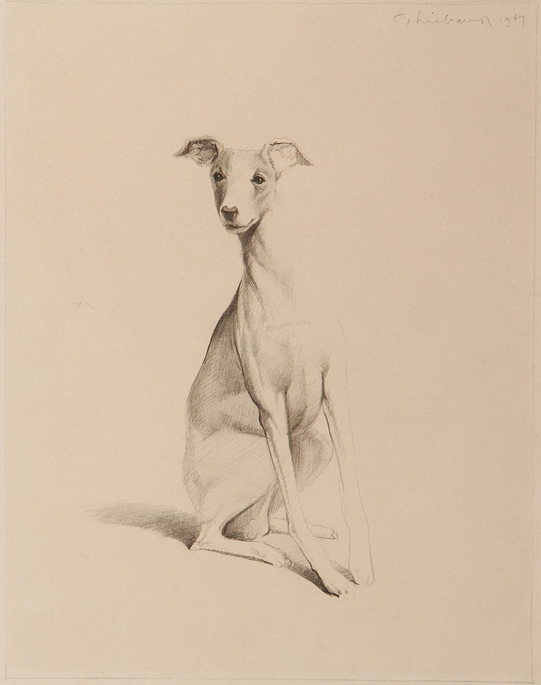 Dog , 1967, graphite. Private collection. © Wayne Thiebaud/Licensed by VAGA, New York, NY (Image courtesy of the Morgan Library, New York)