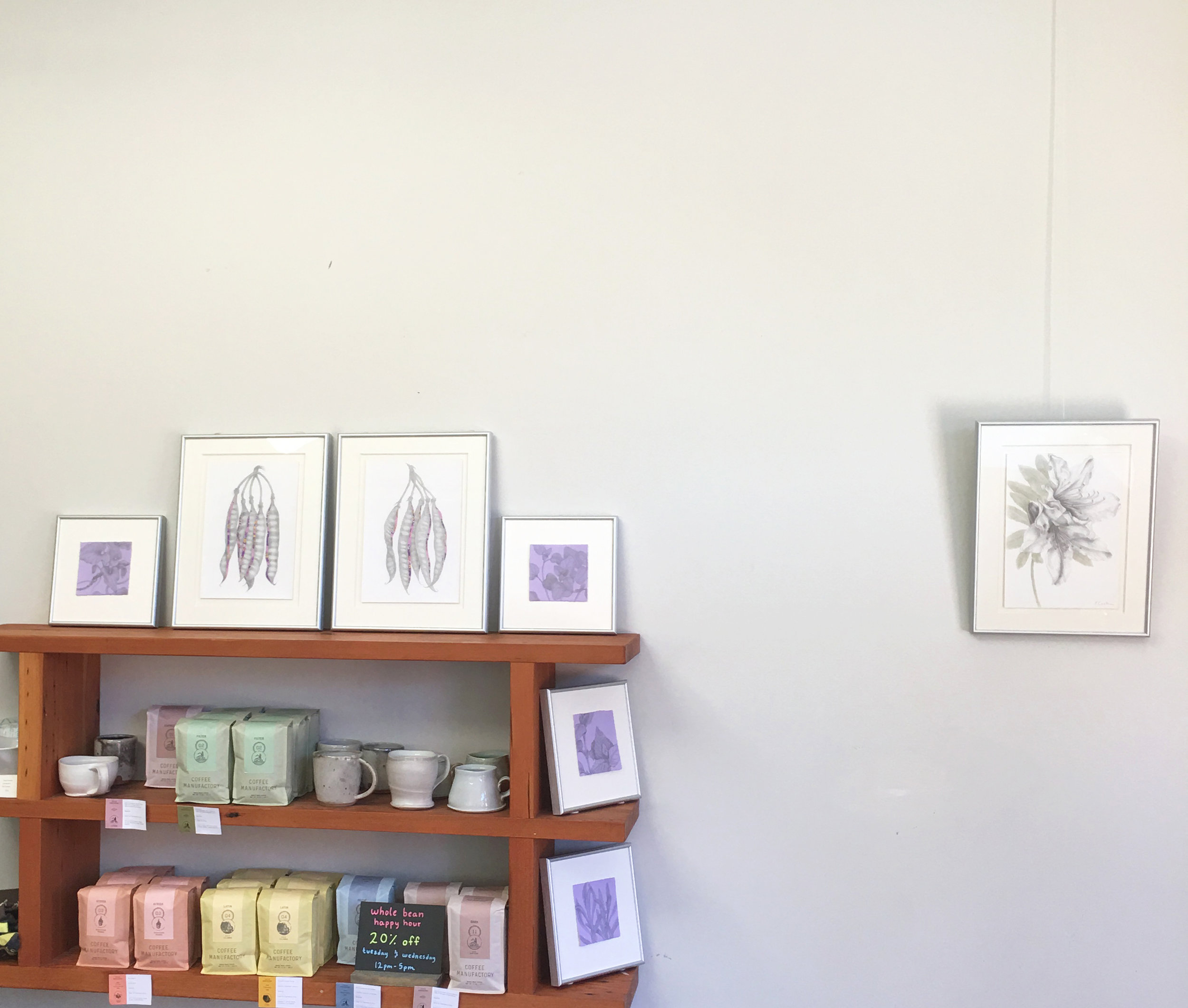 Glints of Light: Drawings in Silver, Subrosa, MLK Street, Oakland. The rest of the exhibition of botanical drawings